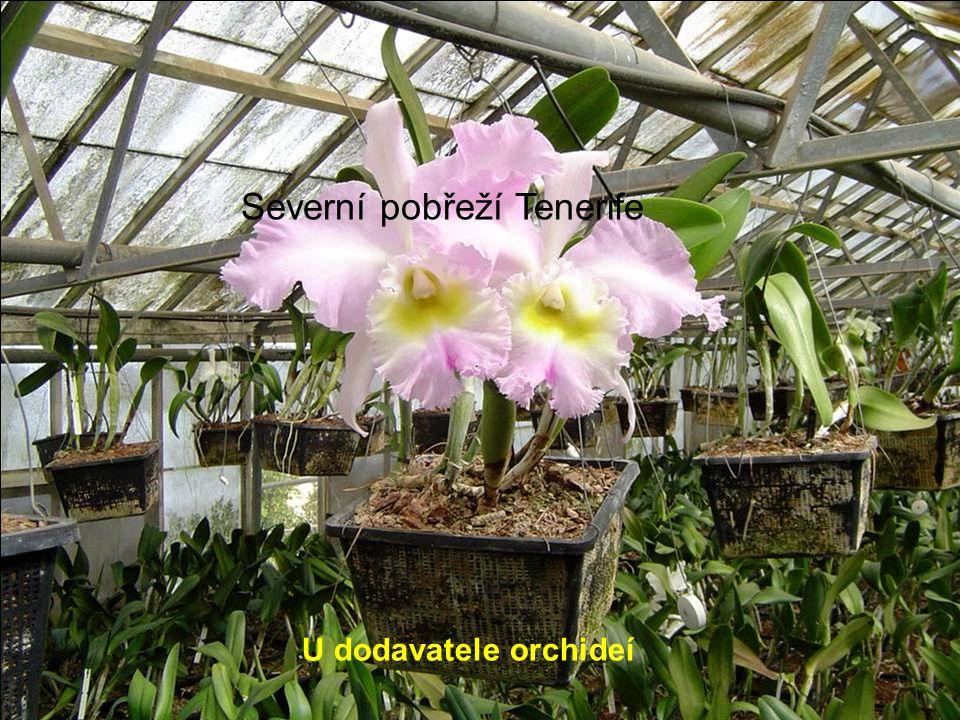 U dodavatele orchideí Severní pobřeží Tenerife