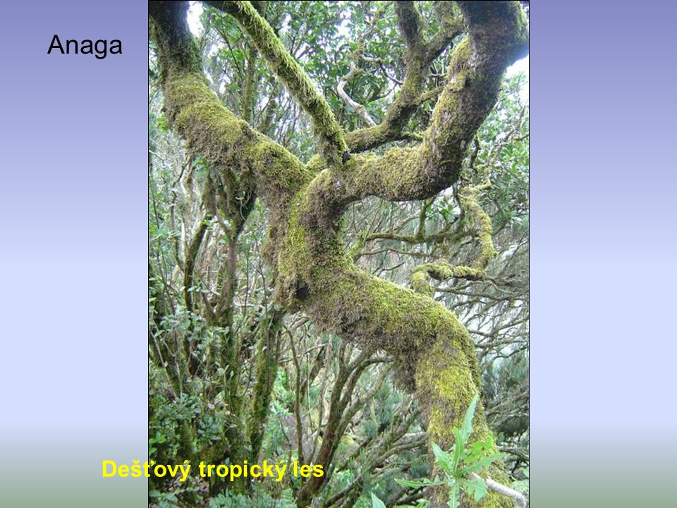 Anaga Dešťový tropický les
