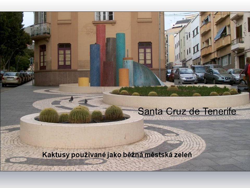 Puerto de la Cruz Městská zeleň – u nás ve sklenících pěstované pokojovky