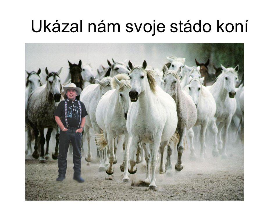 Ukázal nám svoje stádo koní