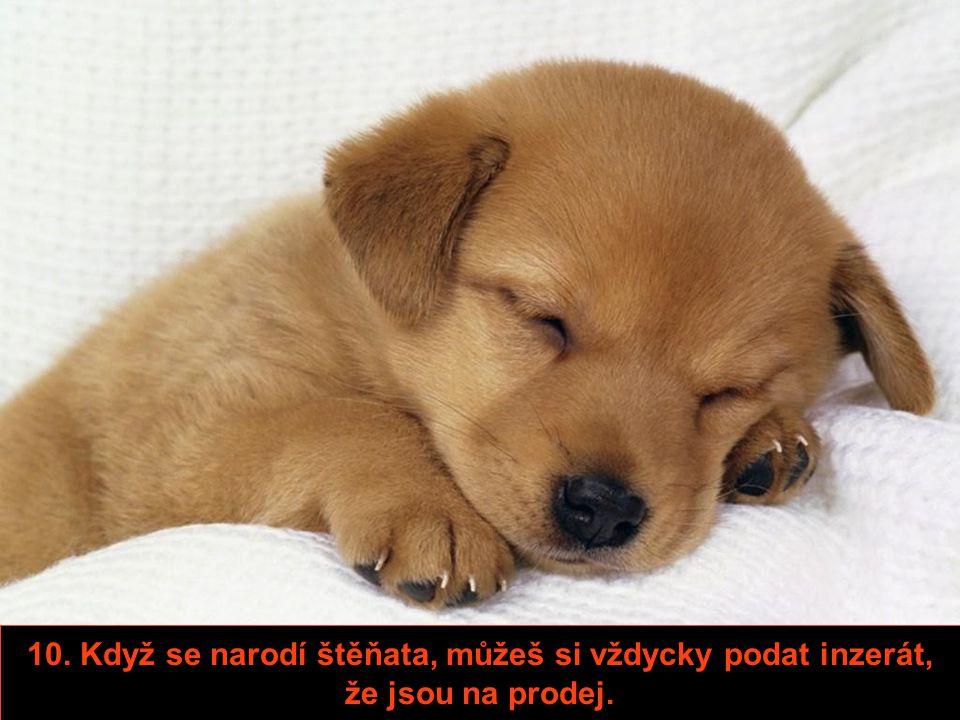 8. Když pes na tobě ucítí jiného psa, nezačne vyvádět, budeš mu jen připadat zajímavější.