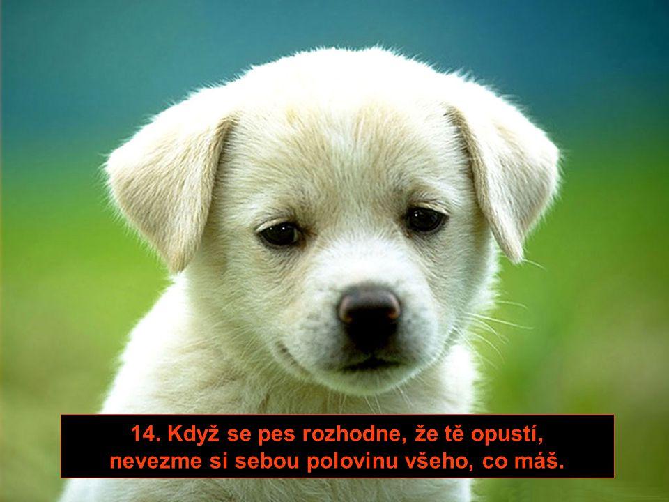 13. Pes tě nikdy v noci neprobudí, aby se tě zeptal, jestli si pořídíš nového psa, až umře.