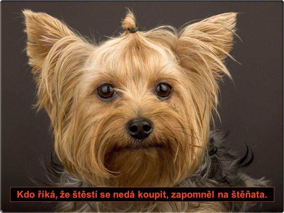 14. Když se pes rozhodne, že tě opustí, nevezme si sebou polovinu všeho, co máš.