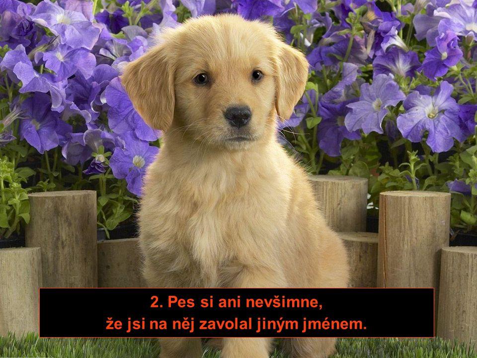 1. Čím později přijdeš, tím více se tvůj pes raduje.