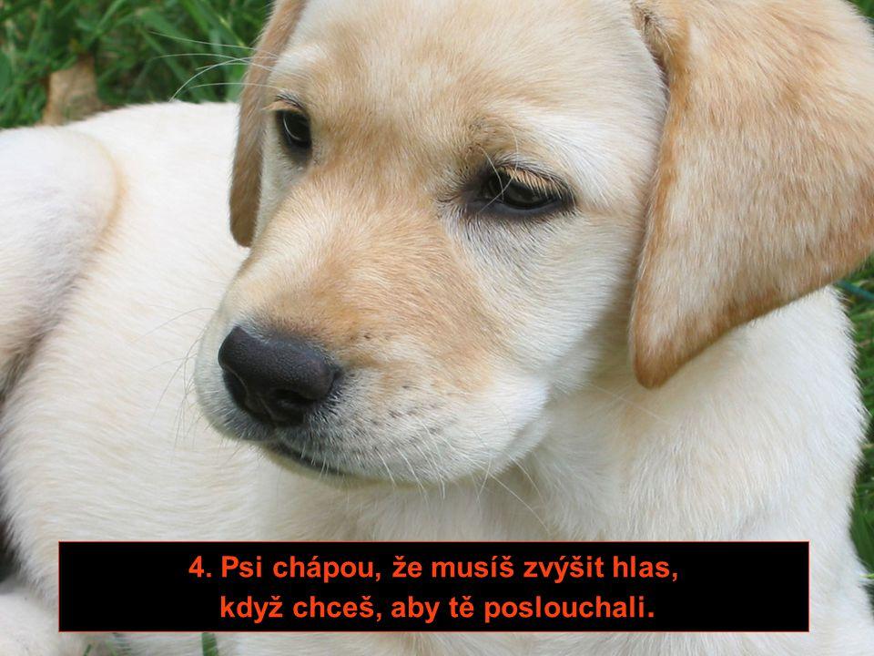 3. Psi milují, když necháte na zemi rozházené věci.