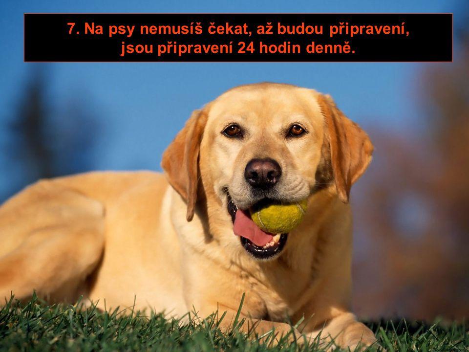 6. Rodiče tvého psa tě obvykle vůbec nenavštěvují.