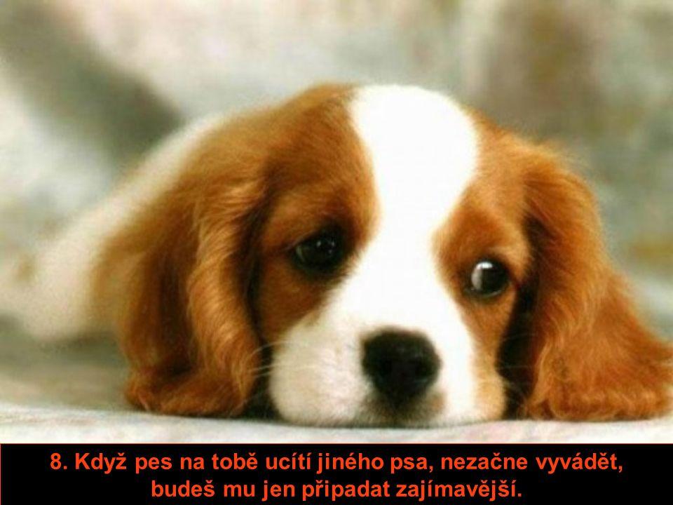 7. Na psy nemusíš čekat, až budou připravení, jsou připravení 24 hodin denně.