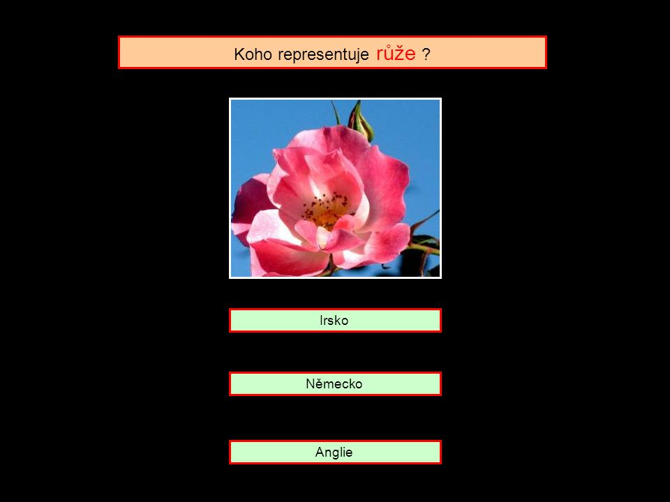 Koho representuje růže ? Německo Irsko Anglie