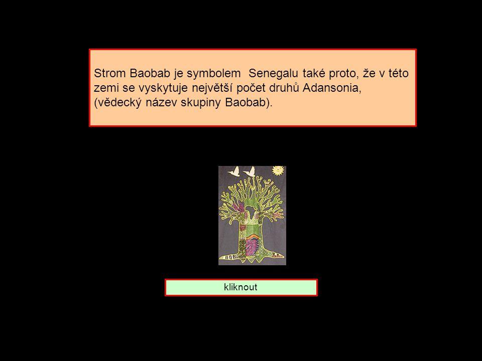 Strom baobab. Které zemi patří Senegal Mali Madagaskar