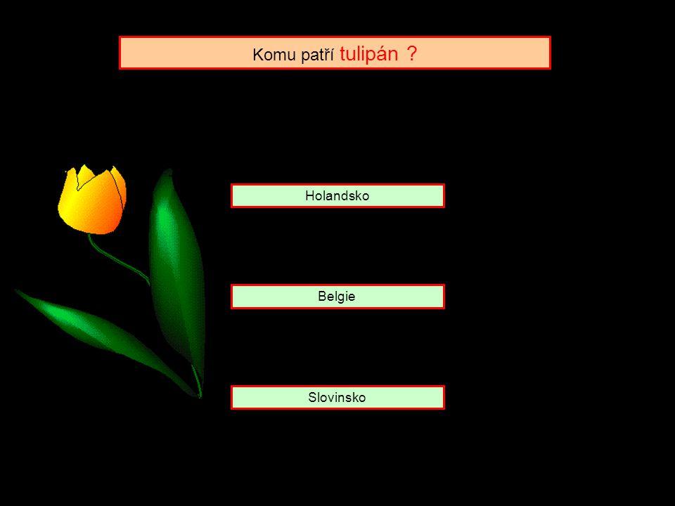 Holandsko Belgie Slovinsko Komu patří tulipán ?