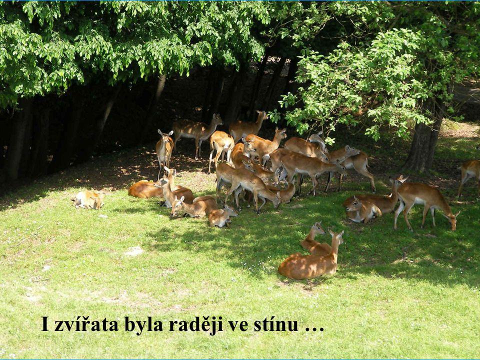 I zvířata byla raději ve stínu …