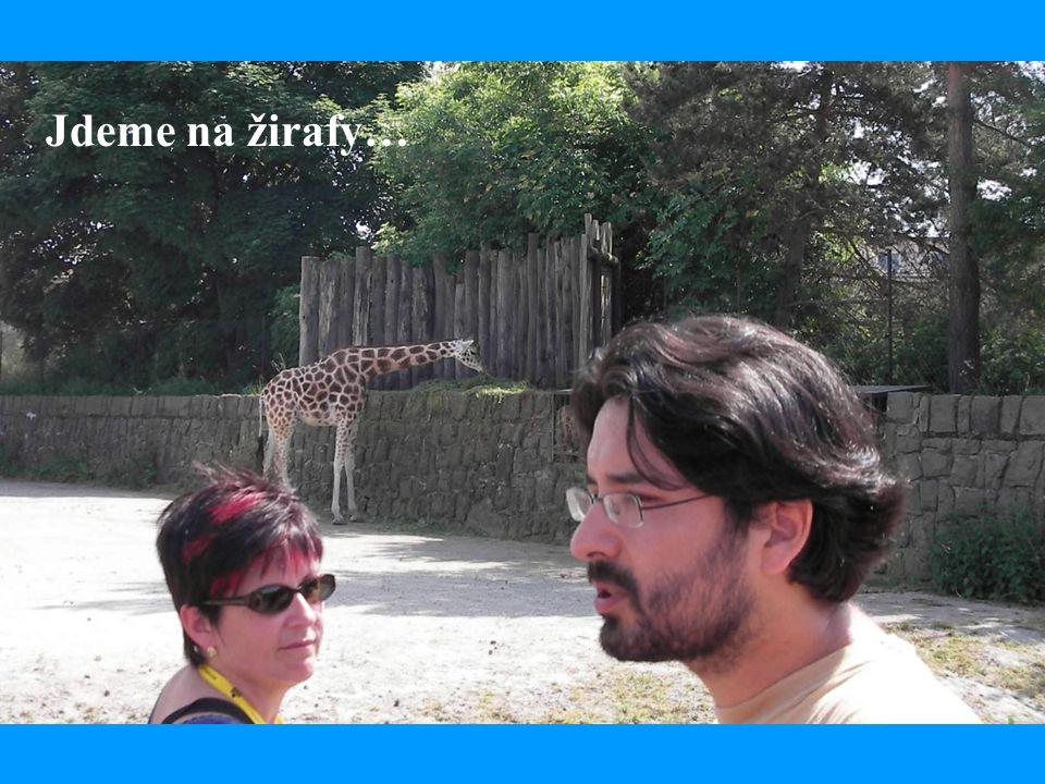 Jdeme na žirafy…
