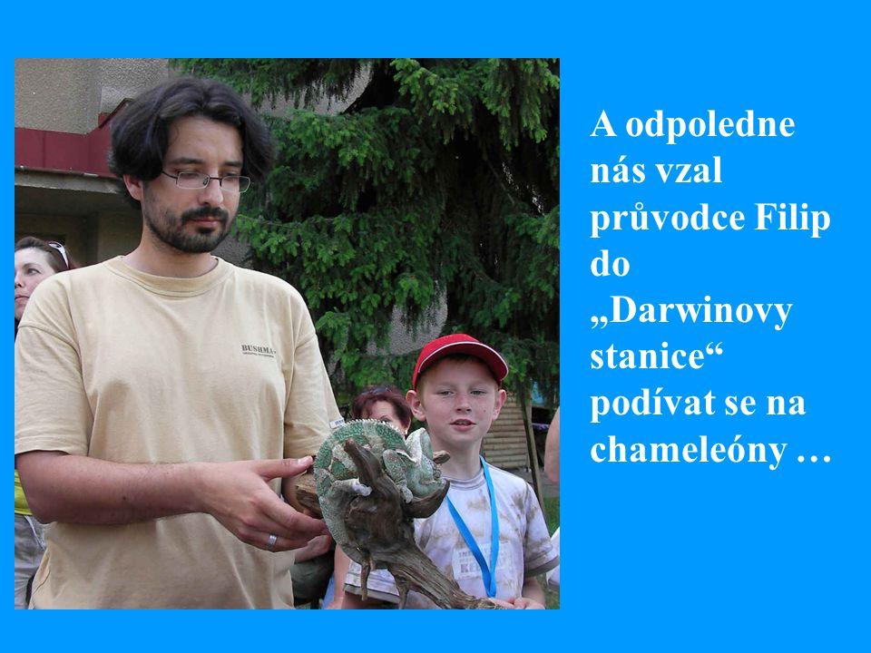 """A odpoledne nás vzal průvodce Filip do """"Darwinovy stanice"""" podívat se na chameleóny …"""