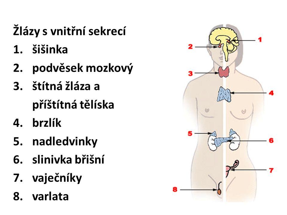 Šišinka (Epifýza) • je připojena k mezimozku • hormon melatonin se tvoří převážně v noci, zlepšuje kvalitu spánku,nastavuje vnitřní biologické hodiny (začíná se využívat při letech přes časová pásma), v dětství brzdí tvorbu pohlavních orgánů