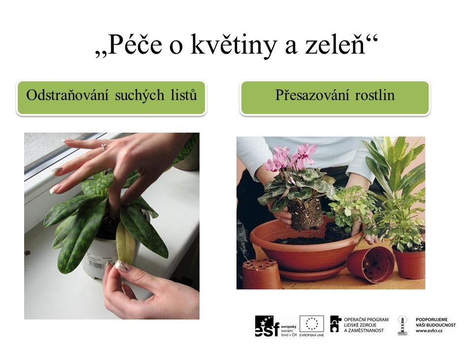 """""""Péče o květiny a zeleň"""" Odstraňování suchých listů Přesazování rostlin"""
