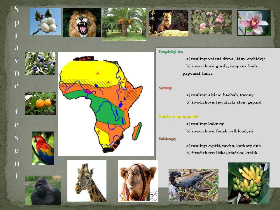 Tropický les a) rostliny: vzácná dřeva, liány, orchideje b) živočichové: gorila, šimpanz, hadi, papoušci, hmyzSavany a) rostliny: akácie, baobab, traviny b) živočichové: lev, žirafa, slon, gepard Pouštěa polopouště Pouště a polopouště a) rostliny: kaktusy b) živočichové: fenek, velbloud, štíSubtropy a) rostliny: cypřiš, vavřín, korkový dub b) živočichové: liška, ještěrka, králík Tropický les a) rostliny: vzácná dřeva, liány, orchideje b) živočichové: gorila, šimpanz, hadi, papoušci, hmyzSavany a) rostliny: akácie, baobab, traviny b) živočichové: lev, žirafa, slon, gepard Pouštěa polopouště Pouště a polopouště a) rostliny: kaktusy b) živočichové: fenek, velbloud, štíSubtropy a) rostliny: cypřiš, vavřín, korkový dub b) živočichové: liška, ještěrka, králík