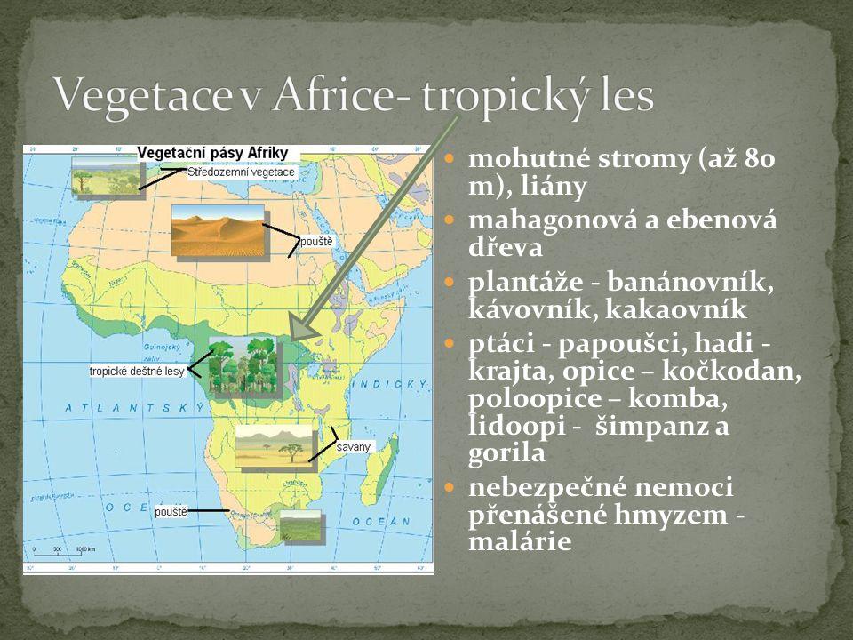  mohutné stromy (až 80 m), liány  mahagonová a ebenová dřeva  plantáže - banánovník, kávovník, kakaovník  ptáci - papoušci, hadi - krajta, opice – kočkodan, poloopice – komba, lidoopi - šimpanz a gorila  nebezpečné nemoci přenášené hmyzem - malárie