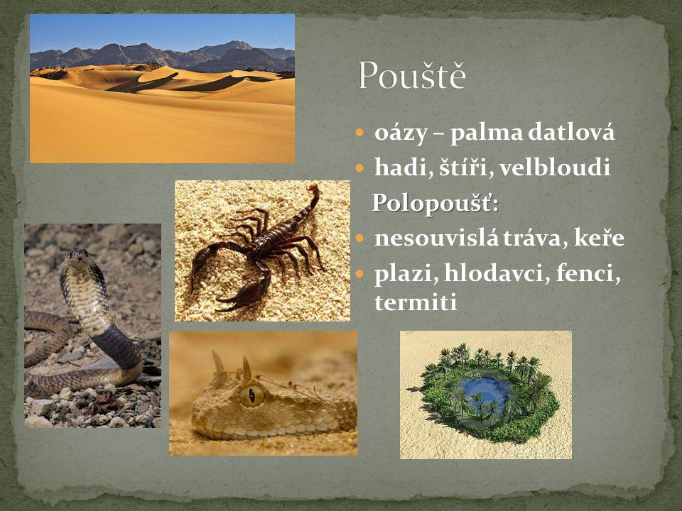  oázy – palma datlová  hadi, štíři, velbloudi Polopoušť: Polopoušť:  nesouvislá tráva, keře  plazi, hlodavci, fenci, termiti