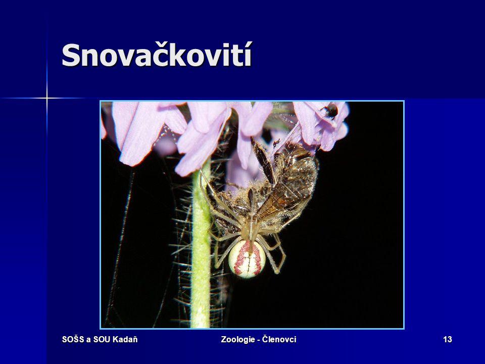 SOŠS a SOU KadaňZoologie - Členovci12 Běžníkovití – Běžník květomilný