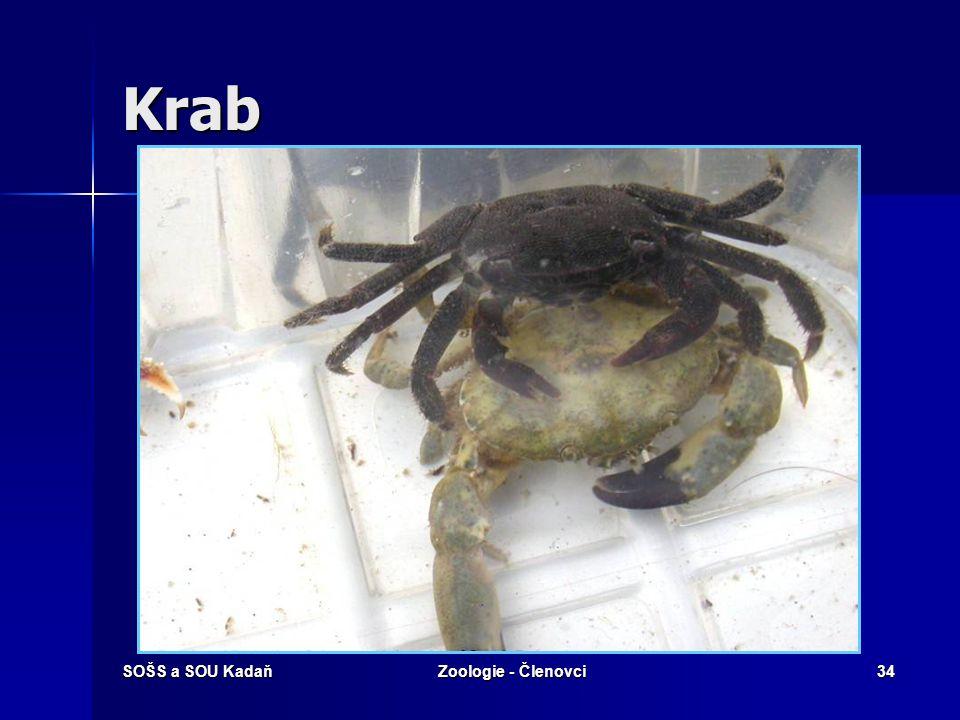 SOŠS a SOU KadaňZoologie - Členovci33 Krab