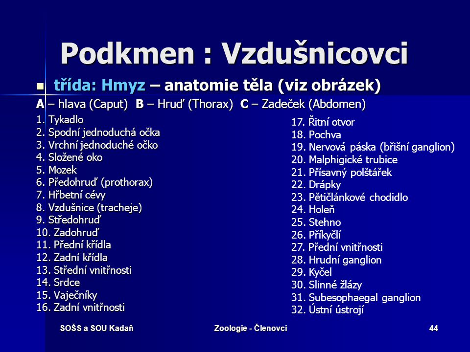 SOŠS a SOU KadaňZoologie - Členovci43 Podkmen : Vzdušnicovci  třída: Chvostoskoci - drobní, podobní hmyzu - drobní, podobní hmyzu - rozkladači - rozkladači