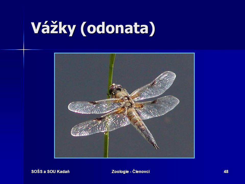 SOŠS a SOU KadaňZoologie - Členovci47 Hmyz - s proměnou nedokonalou Příklady řádů:  Vážky  Rovnokřídlí  Všekazi  Švábi  Škvoři  Ploštice  Vši  Třásnokřídlí  Stejnokřídlí - vajíčko - larva = nymfa (několikrát se svléká) - dospělý jedinec