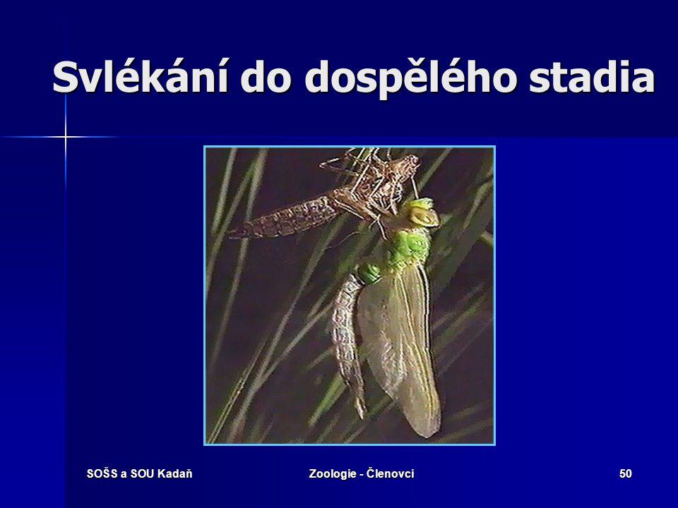 SOŠS a SOU KadaňZoologie - Členovci49 Larva vážky – vodní prostředí