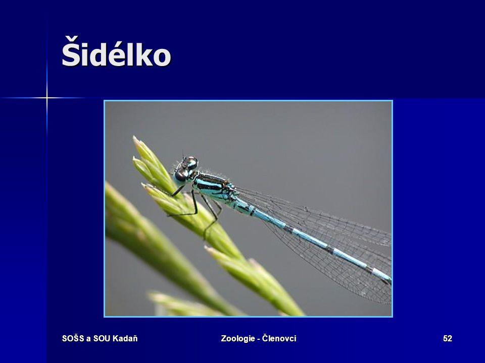SOŠS a SOU KadaňZoologie - Členovci51 Vážka ploská