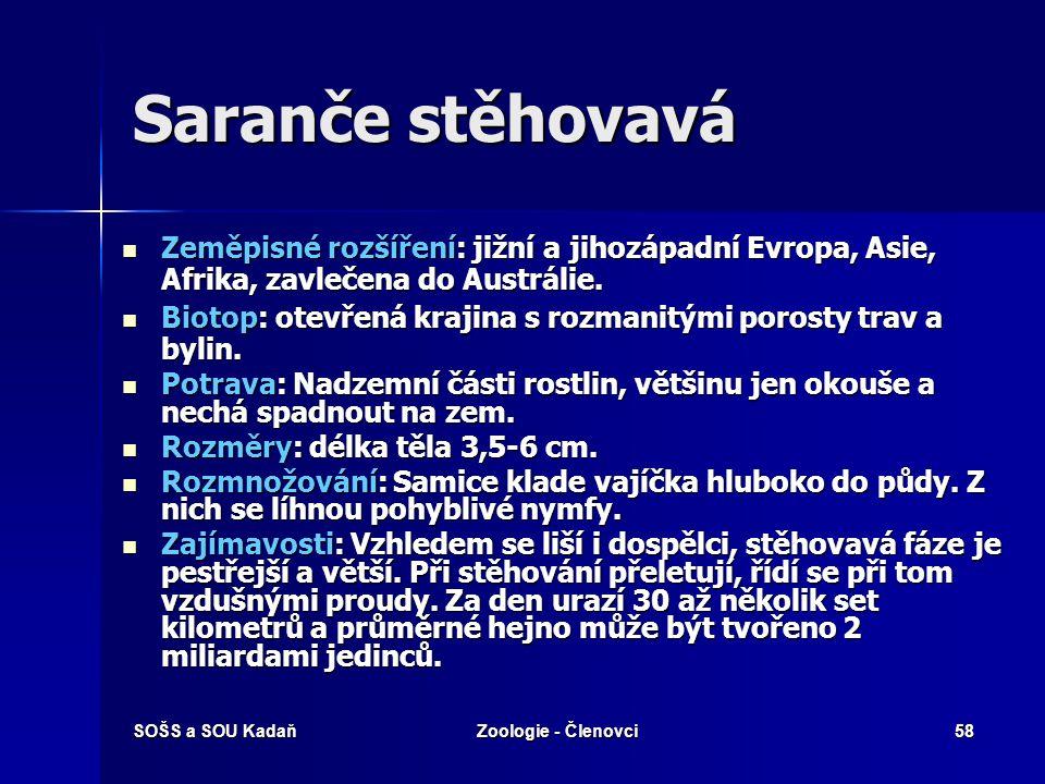 SOŠS a SOU KadaňZoologie - Členovci57 Rovnokřídlí Kobylka zelená