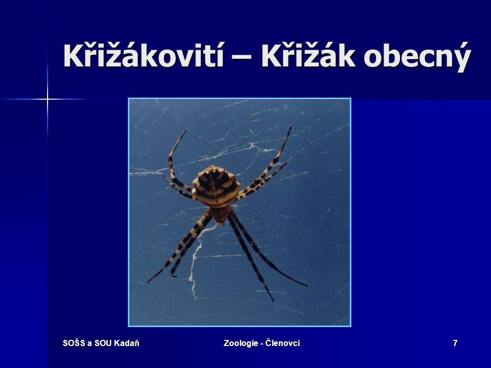 SOŠS a SOU KadaňZoologie - Členovci6 Třída: Pavoukovci  Hlavohruď a zadeček spojené tenkou stopkou.  4 páry končetin na hlavohrudi.  6-8 jednoduchý