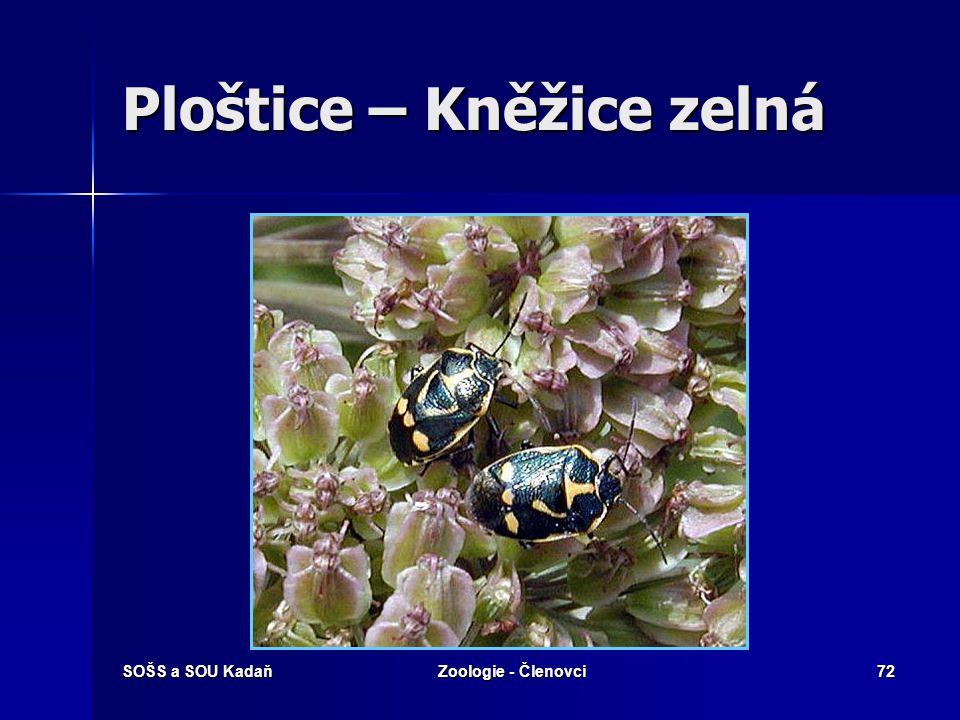 SOŠS a SOU KadaňZoologie - Členovci71 Ploštice – Ruměnice pospolná