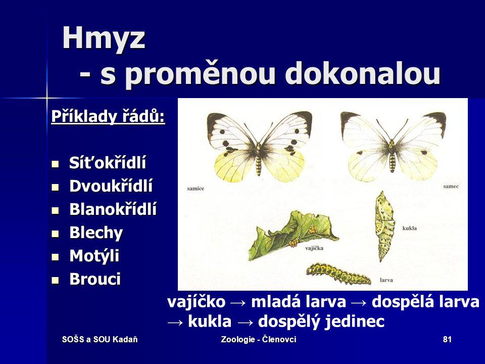 SOŠS a SOU KadaňZoologie - Členovci80 Stejnokřídlí – Molice