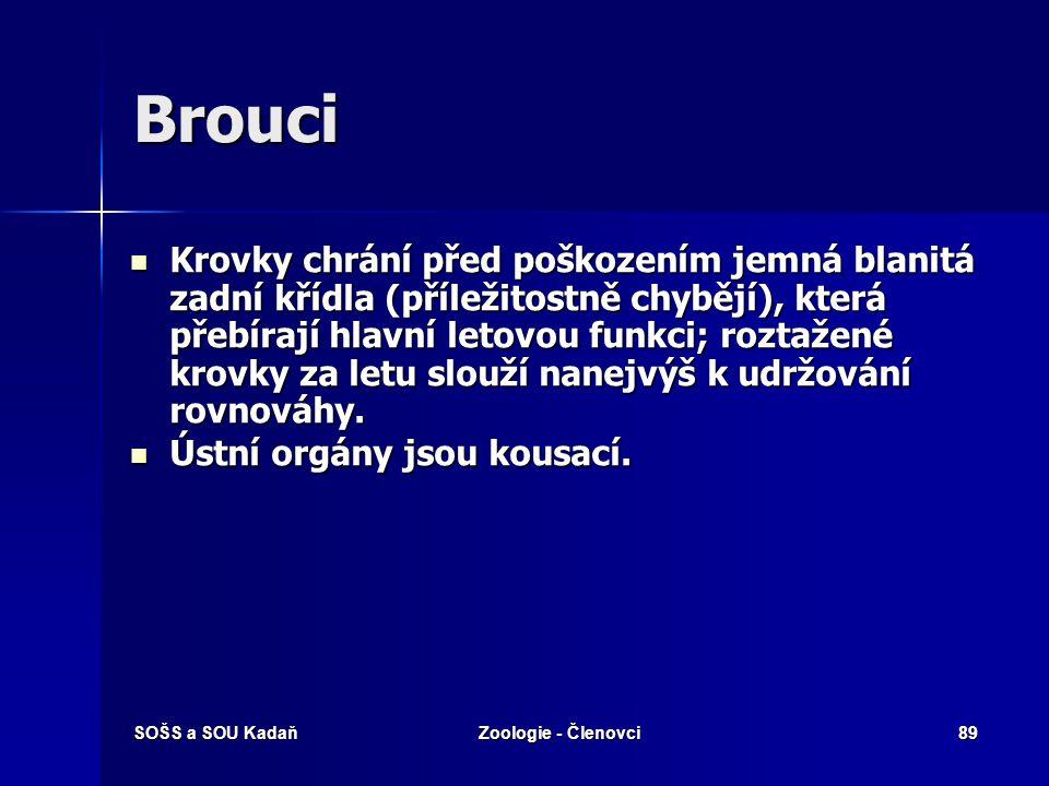SOŠS a SOU KadaňZoologie - Členovci88 Brouci - 450 000 ve 166 čeledích, v ČR 108 čeledí, asi 6000 druhů. - viz samostatná prezentace  Tělo kryté siln