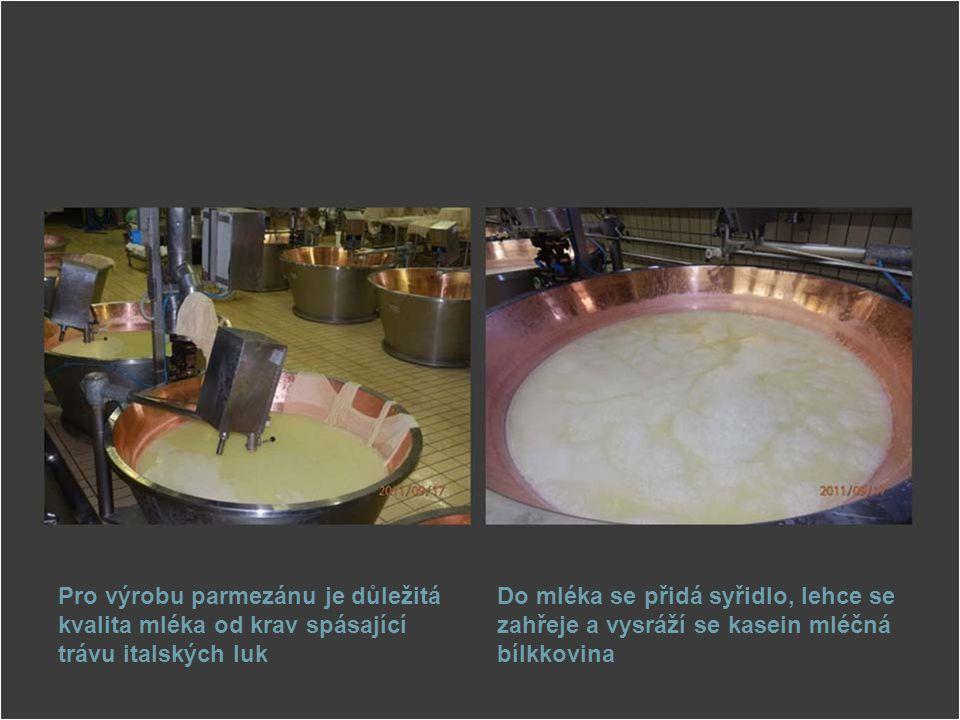 Pro výrobu parmezánu je důležitá kvalita mléka od krav spásající trávu italských luk Do mléka se přidá syřidlo, lehce se zahřeje a vysráží se kasein m