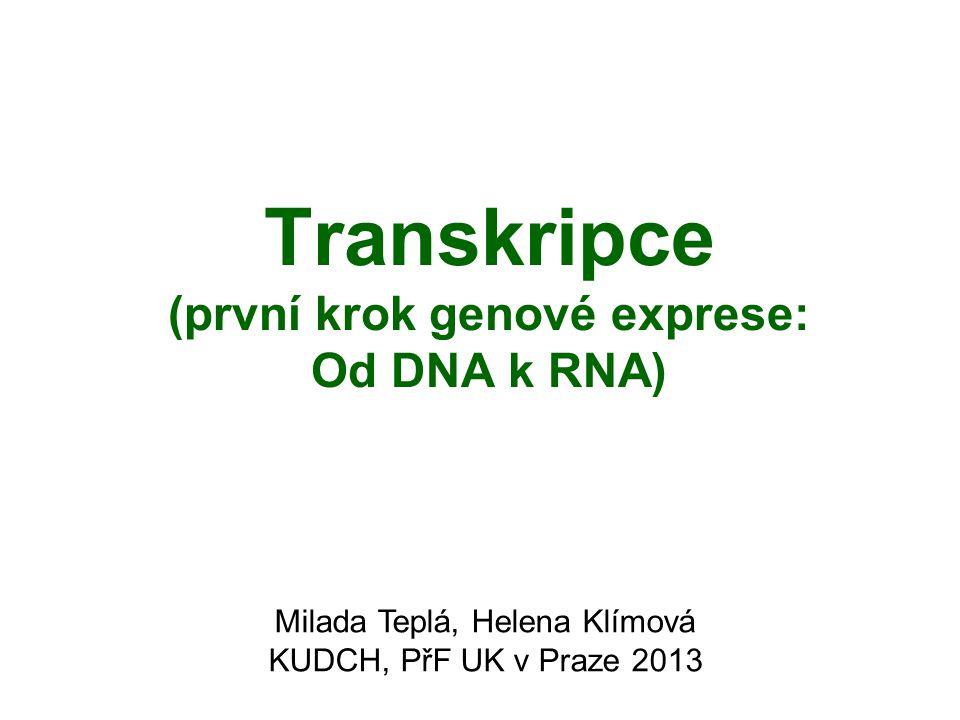Transkripce (první krok genové exprese: Od DNA k RNA) Milada Teplá, Helena Klímová KUDCH, PřF UK v Praze 2013