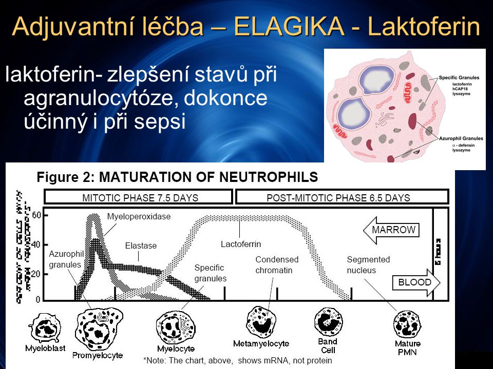 Adjuvantní léčba – ELAGIKA - Laktoferin laktoferin- zlepšení stavů při agranulocytóze, dokonce účinný i při sepsi