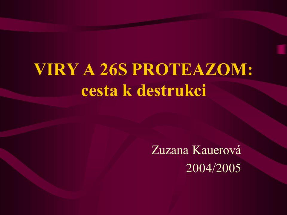 VIRY A 26S PROTEAZOM: cesta k destrukci Zuzana Kauerová 2004/2005