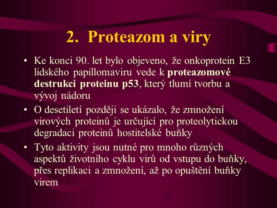 2.Proteazom a viry •Ke konci 90.