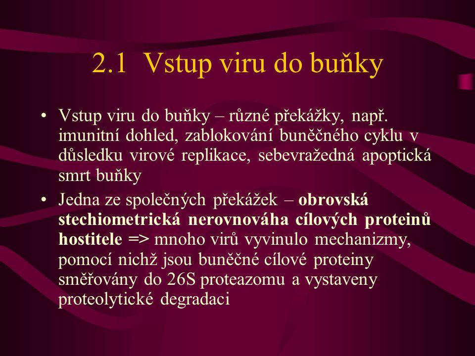 2.1 Vstup viru do buňky •Vstup viru do buňky – různé překážky, např.
