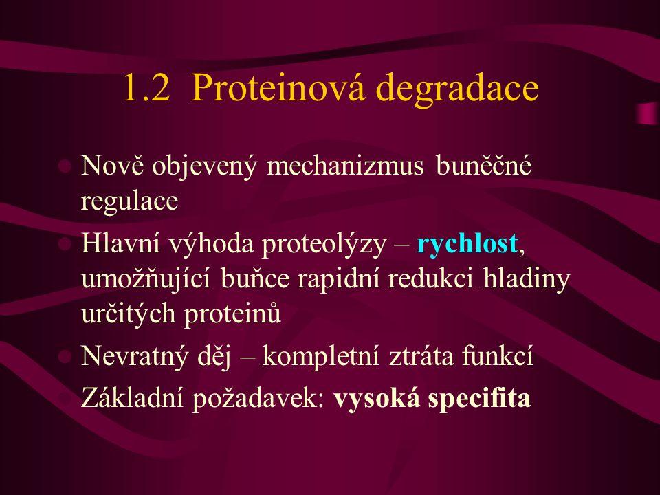 1.2 Proteinová degradace  Nově objevený mechanizmus buněčné regulace  Hlavní výhoda proteolýzy – rychlost, umožňující buňce rapidní redukci hladiny určitých proteinů  Nevratný děj – kompletní ztráta funkcí  Základní požadavek: vysoká specifita