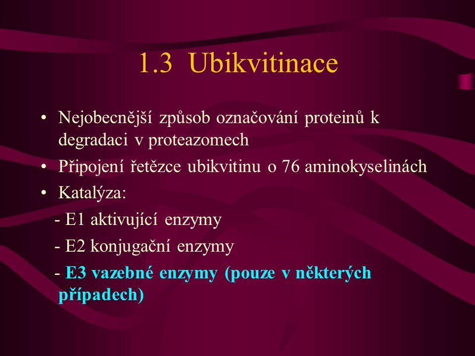1.3 Ubikvitinace •Nejobecnější způsob označování proteinů k degradaci v proteazomech •Připojení řetězce ubikvitinu o 76 aminokyselinách •Katalýza: - E1 aktivující enzymy - E2 konjugační enzymy - E3 vazebné enzymy (pouze v některých případech)
