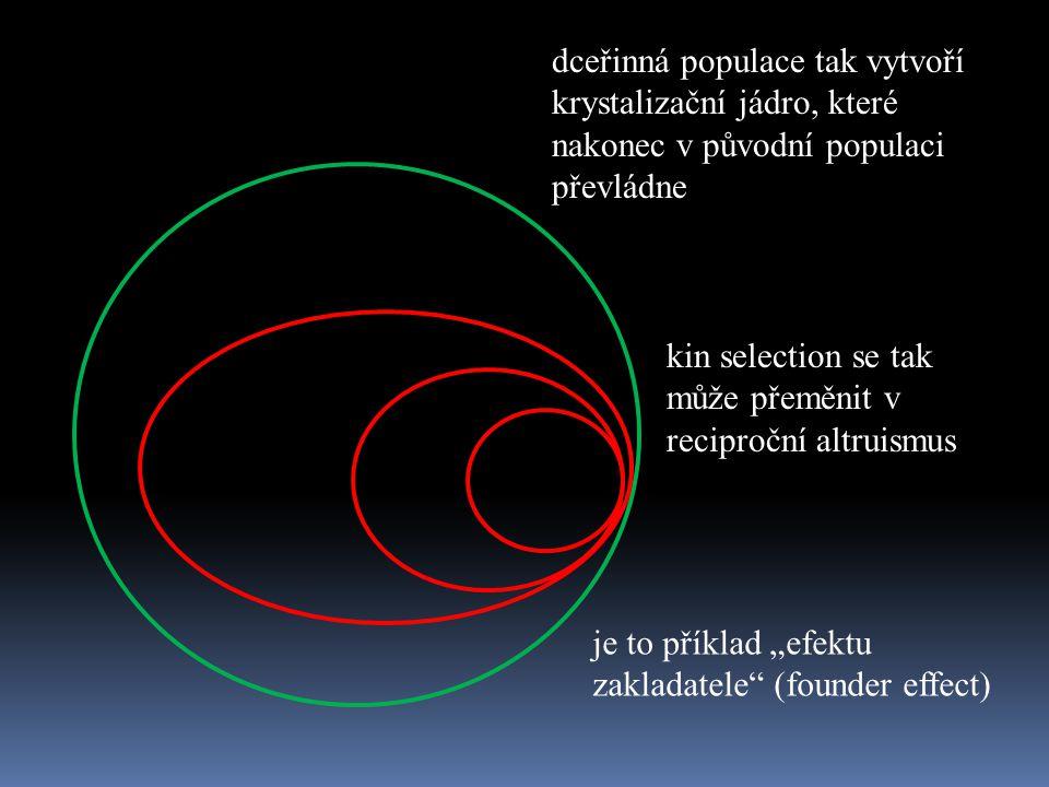 """dceřinná populace tak vytvoří krystalizační jádro, které nakonec v původní populaci převládne je to příklad """"efektu zakladatele"""" (founder effect) kin"""