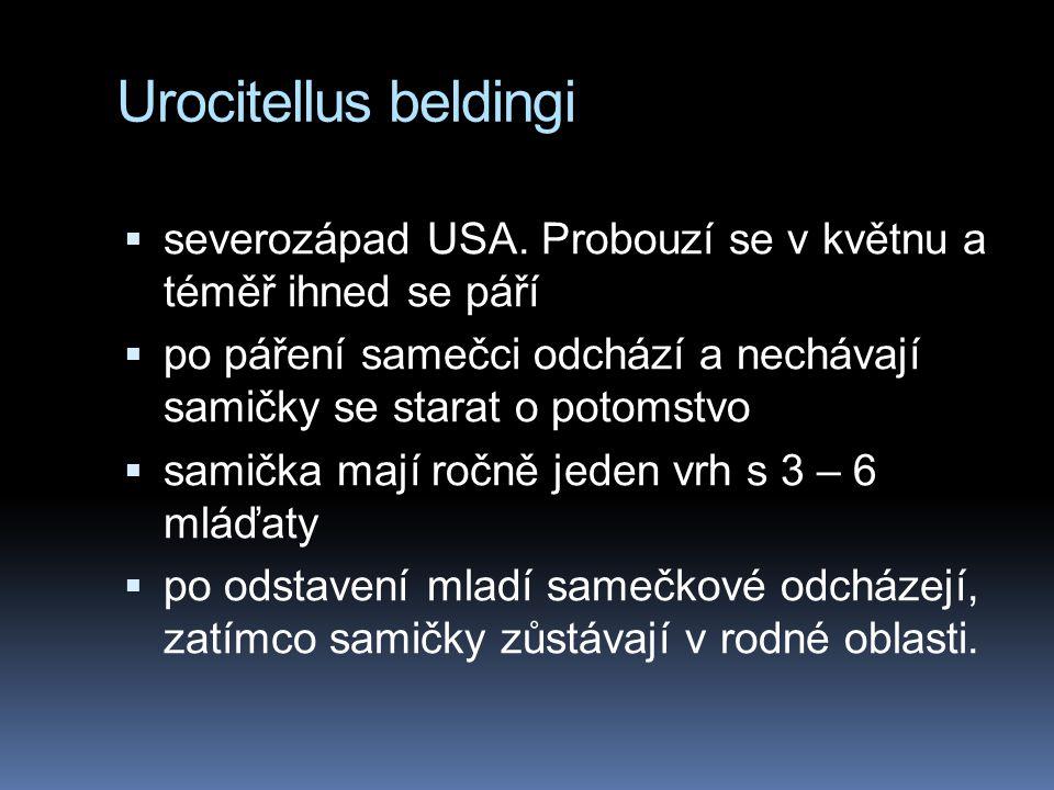 Urocitellus beldingi  severozápad USA. Probouzí se v květnu a téměř ihned se páří  po páření samečci odchází a nechávají samičky se starat o potomst