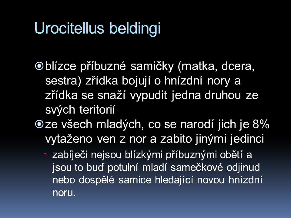 Urocitellus beldingi  blízce příbuzné samičky (matka, dcera, sestra) zřídka bojují o hnízdní nory a zřídka se snaží vypudit jedna druhou ze svých ter