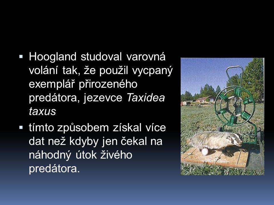  Hoogland studoval varovná volání tak, že použil vycpaný exemplář přirozeného predátora, jezevce Taxidea taxus  tímto způsobem získal více dat než k