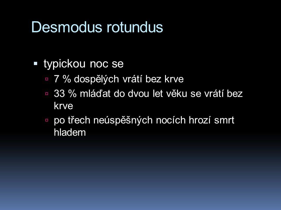 Desmodus rotundus  typickou noc se  7 % dospělých vrátí bez krve  33 % mláďat do dvou let věku se vrátí bez krve  po třech neúspěšných nocích hroz