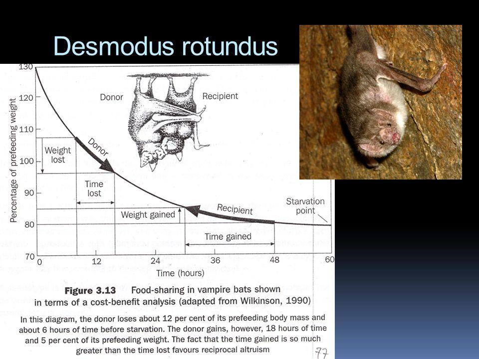 Desmodus rotundus