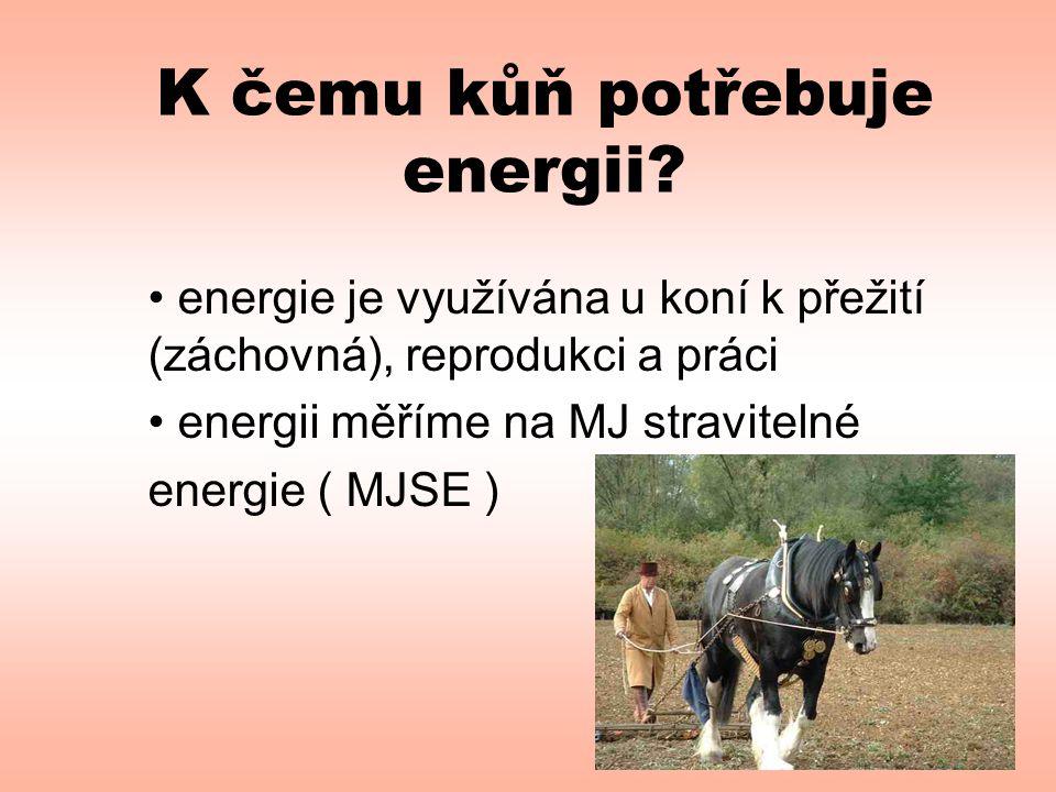 K čemu kůň potřebuje energii? • energie je využívána u koní k přežití (záchovná), reprodukci a práci • energii měříme na MJ stravitelné energie ( MJSE