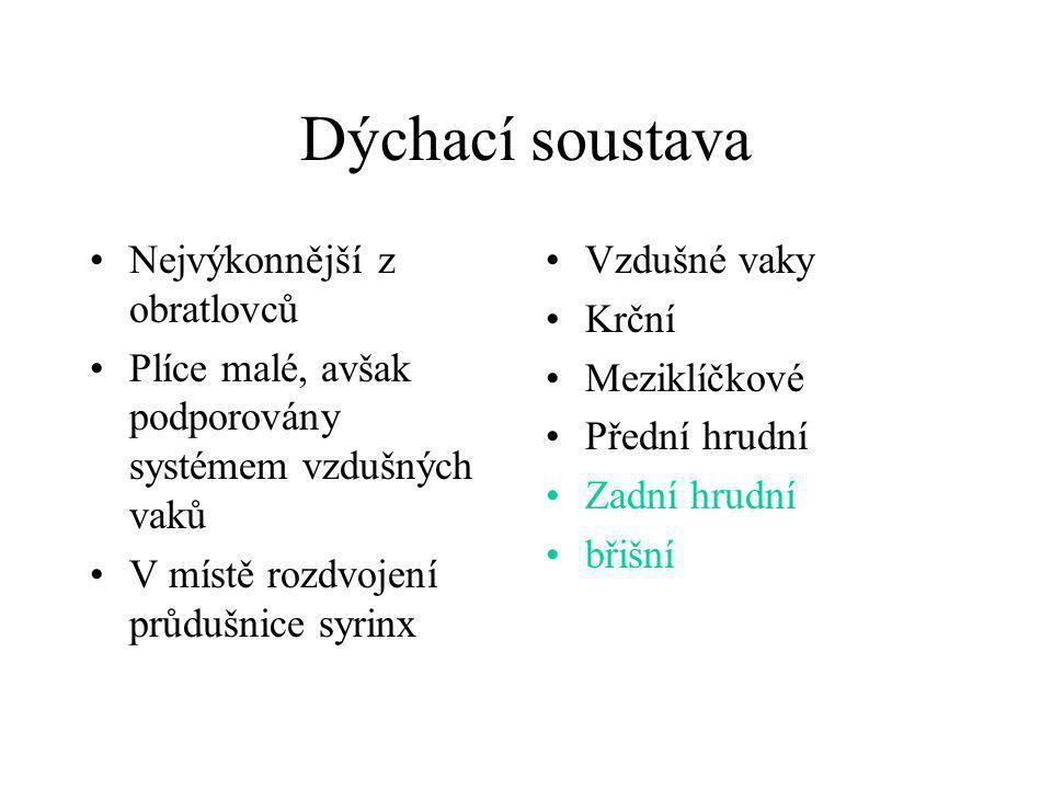 Dýchací soustava •Nejvýkonnější z obratlovců •Plíce malé, avšak podporovány systémem vzdušných vaků •V místě rozdvojení průdušnice syrinx •Vzdušné vak