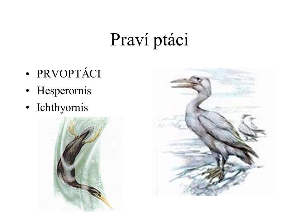 Praví ptáci •PRVOPTÁCI •Hesperornis •Ichthyornis